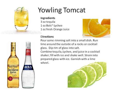 b_Yowling_Tomcat